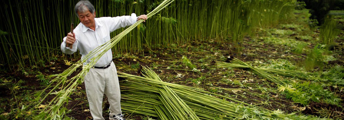 Eco products from hemp and bamboo